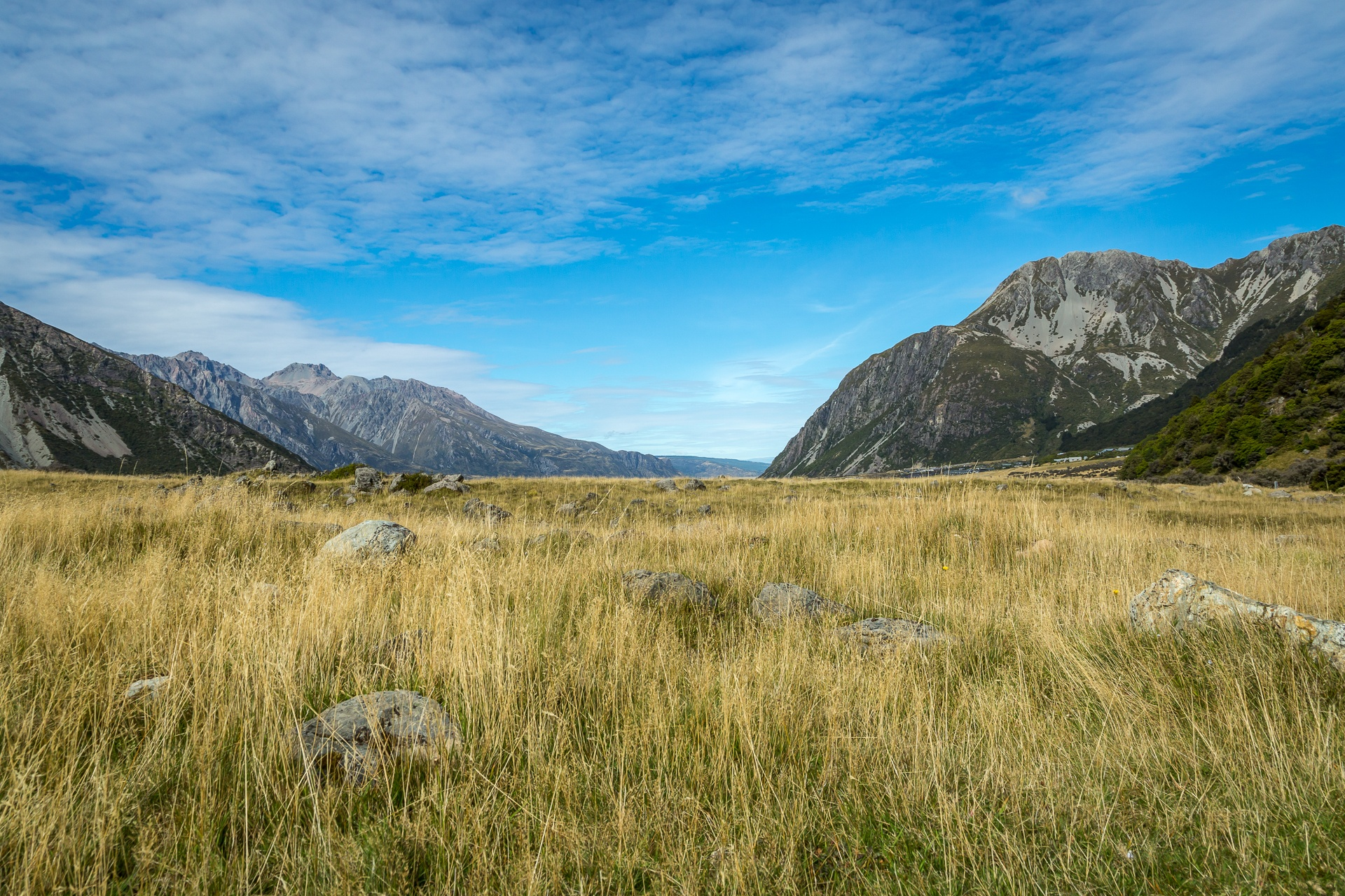 Meadow in Mount Cook National Park