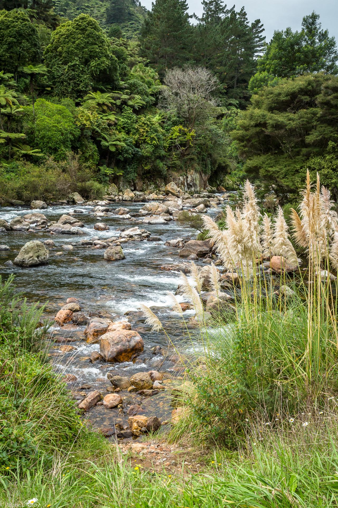 Stream flowing through the rain forest