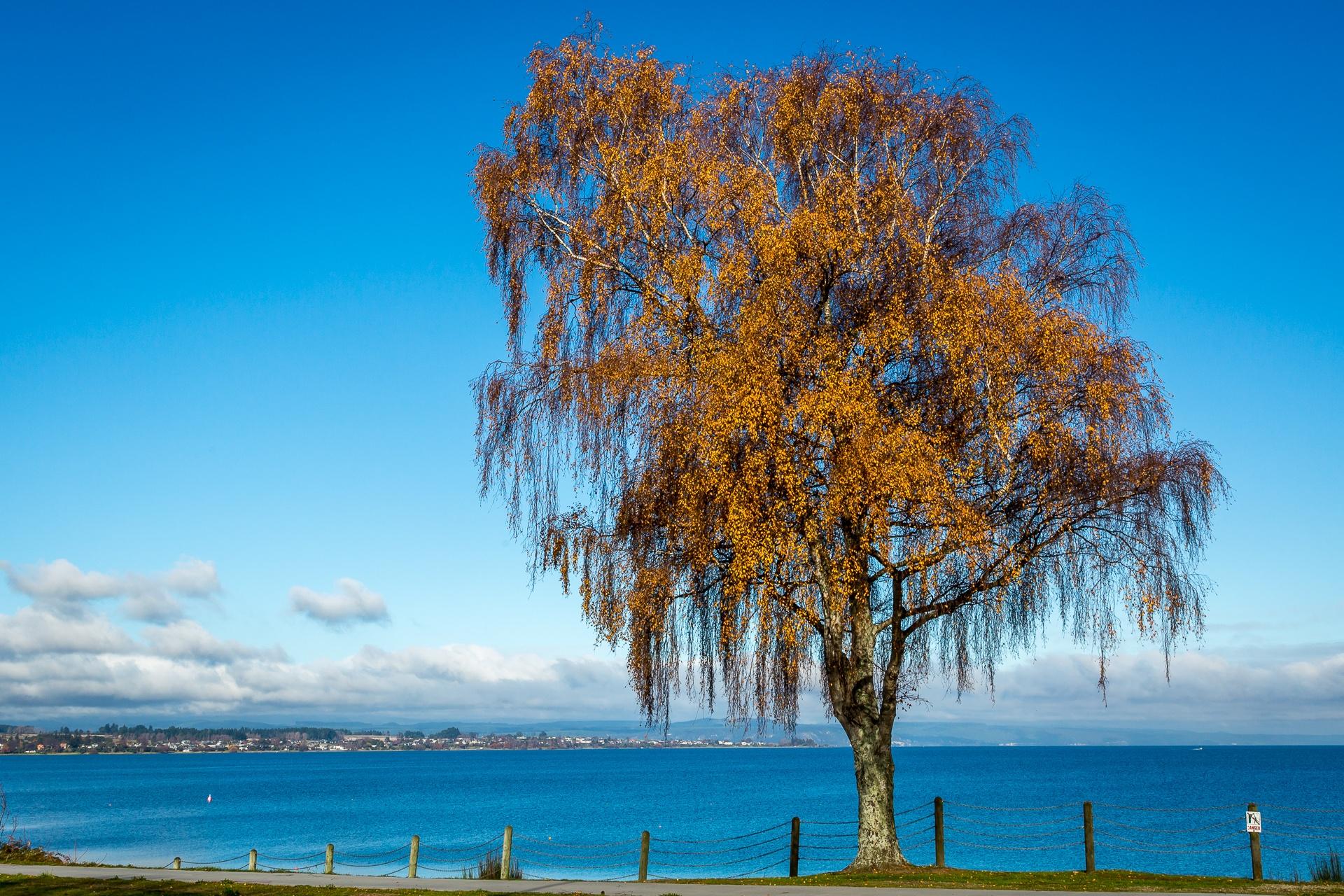 Autumn colours at Lake Taupo