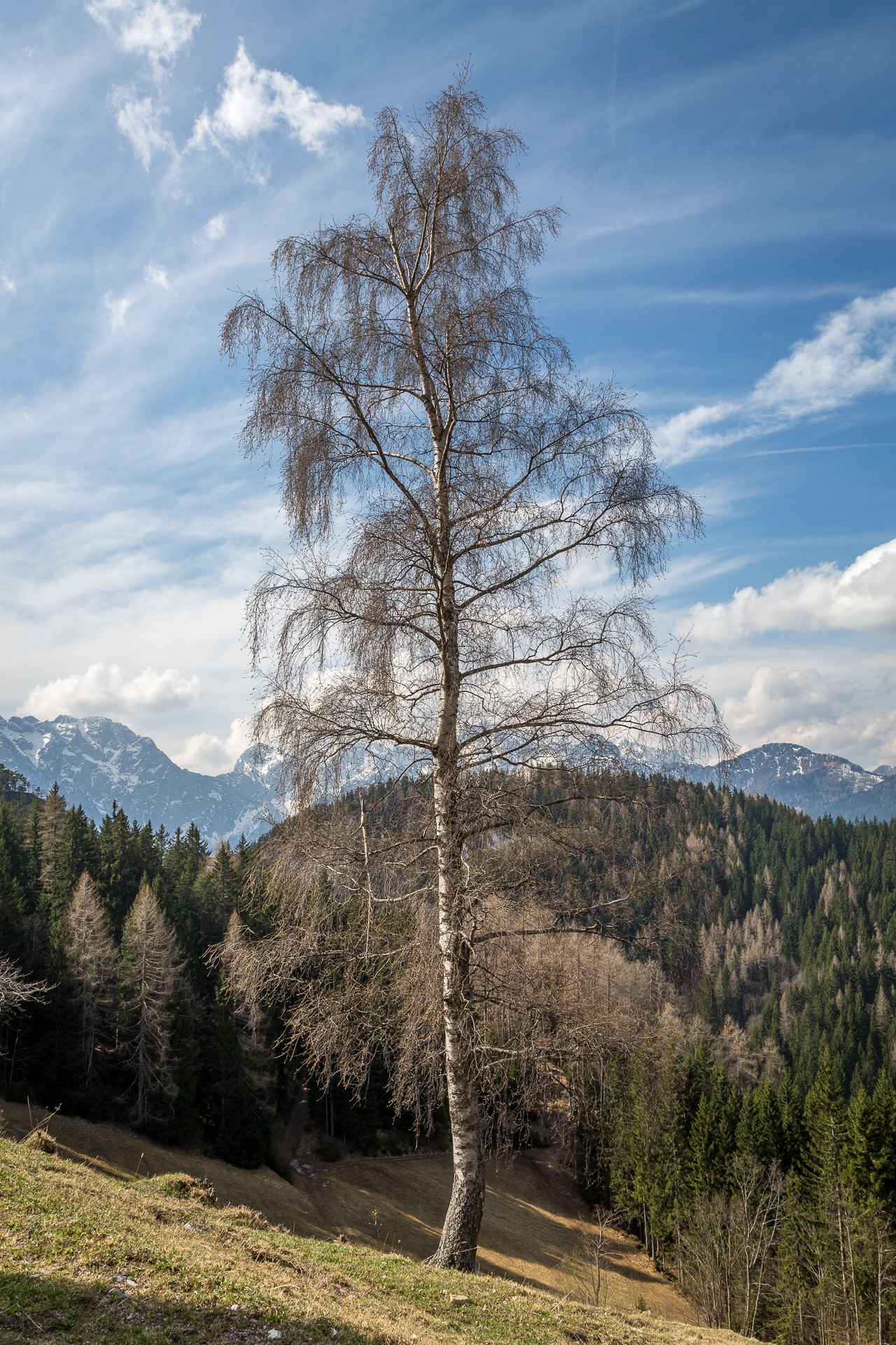 Lone tree among many