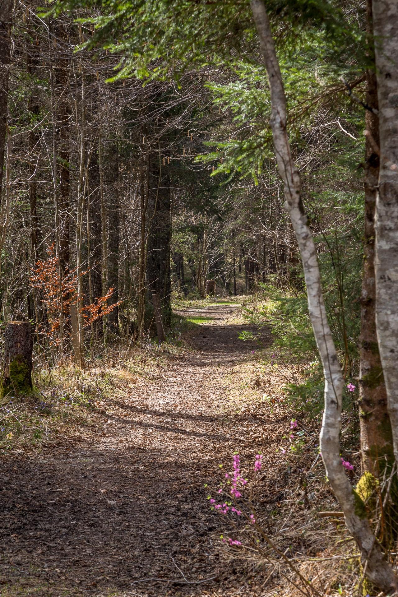 A track through a Slovenian forest