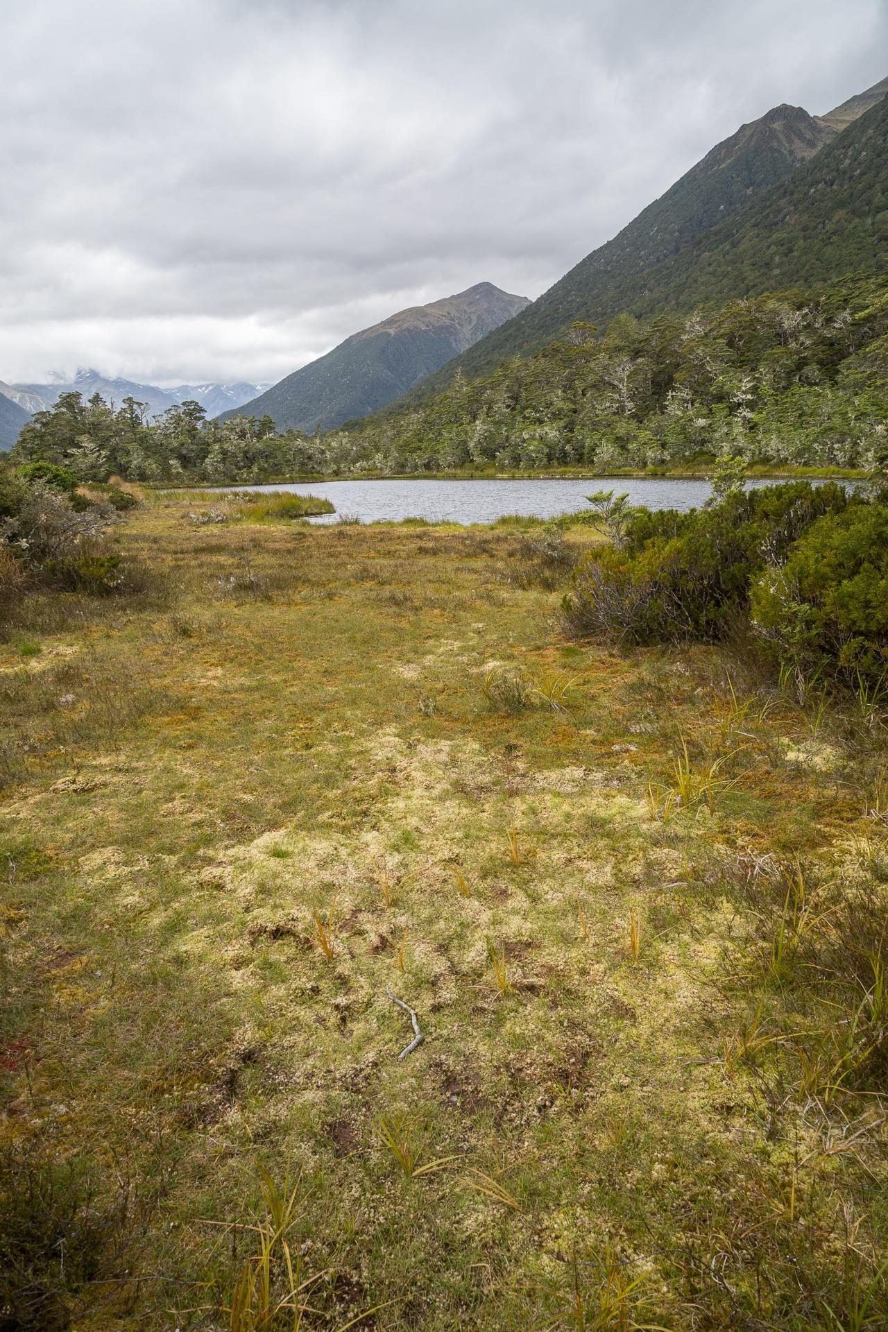 Marshes at shore of mountain lake