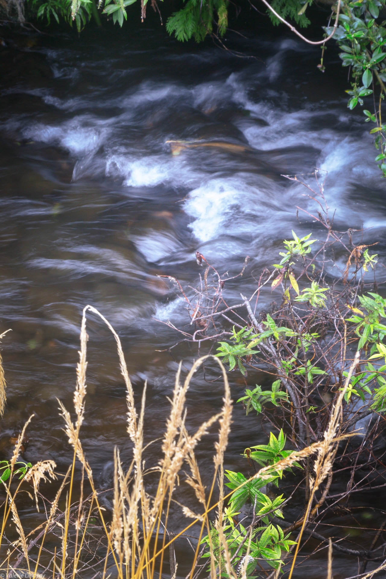 Silky waters of a fast-moving stream