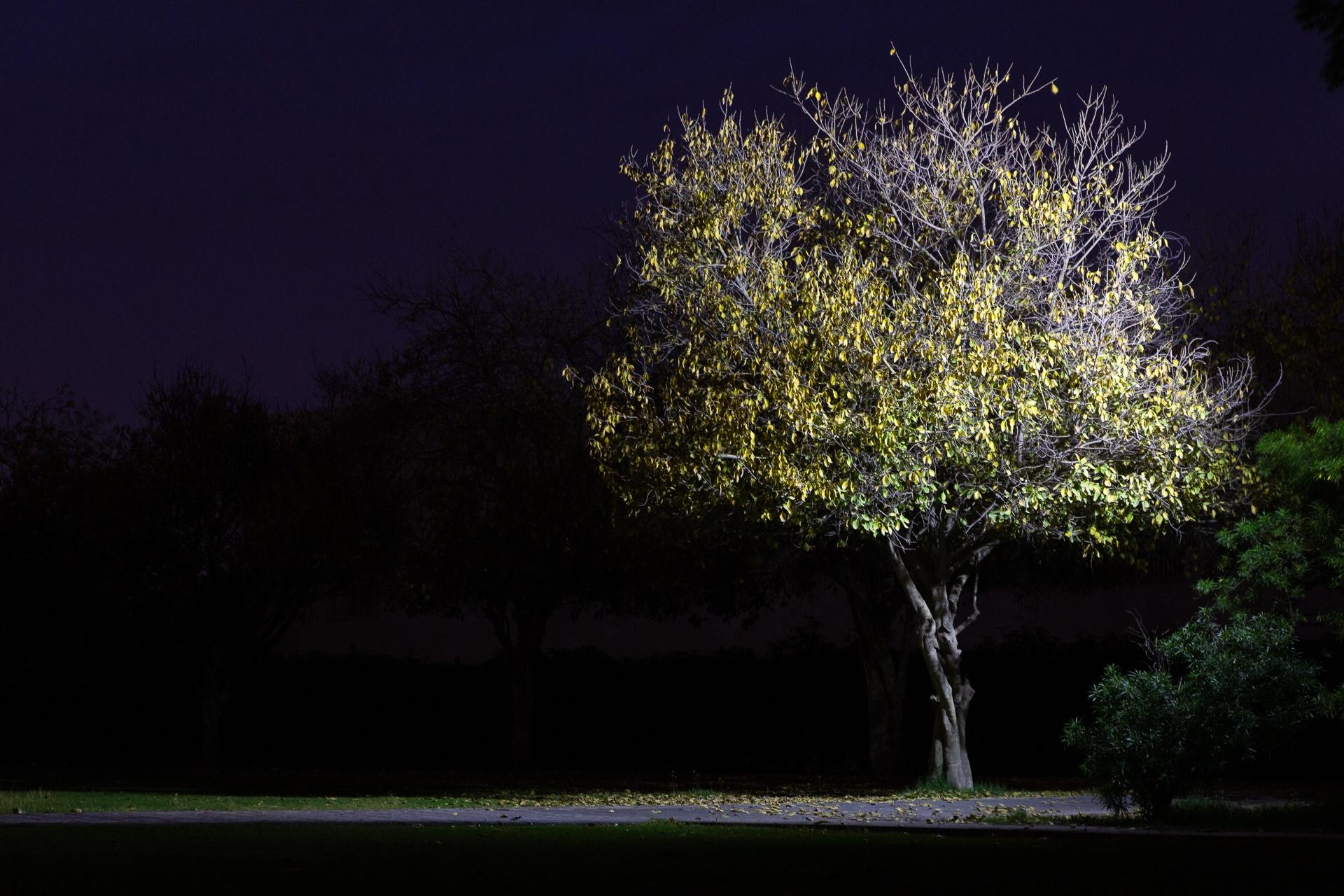 Lone lit tree