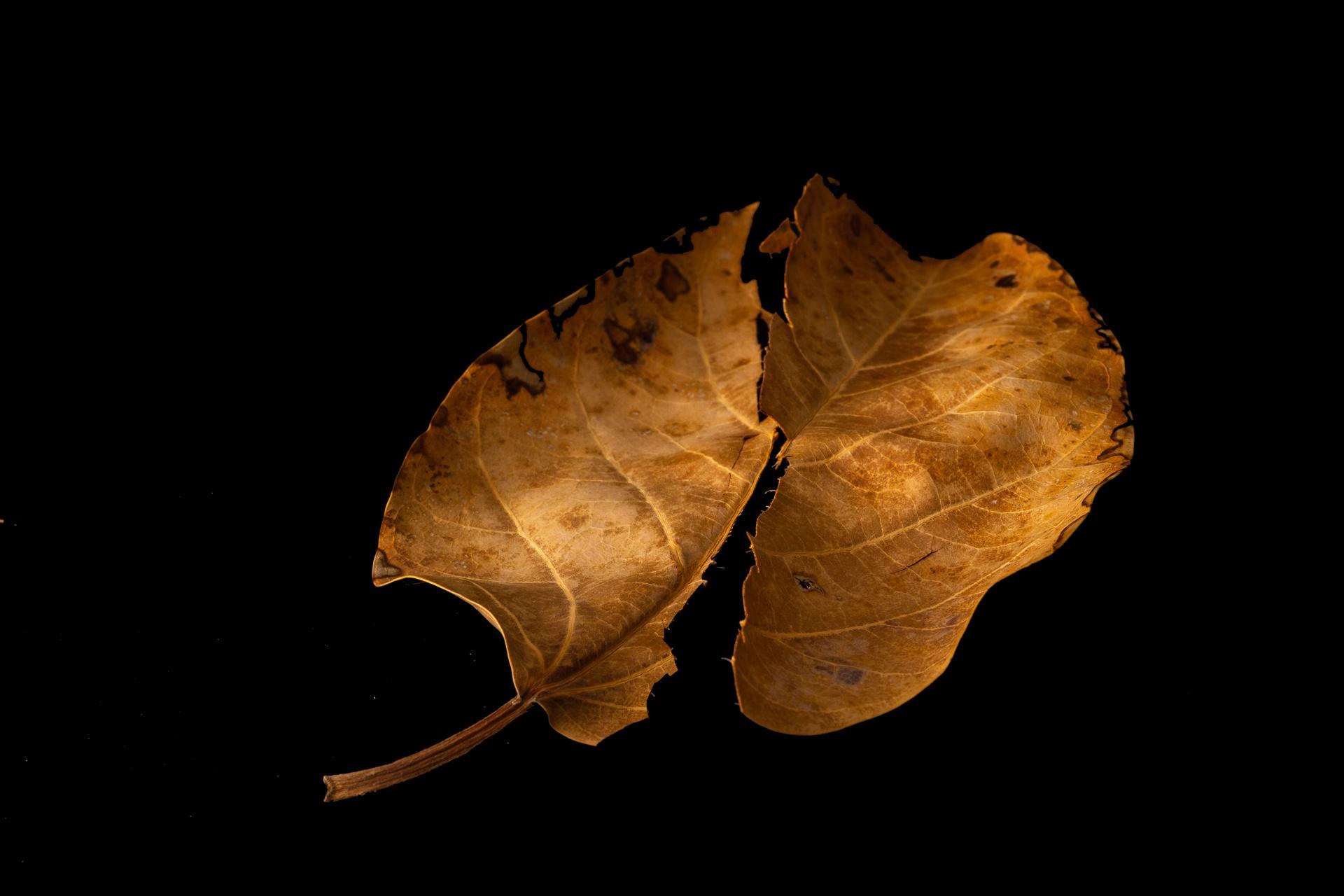 Apart and together - broken leaf