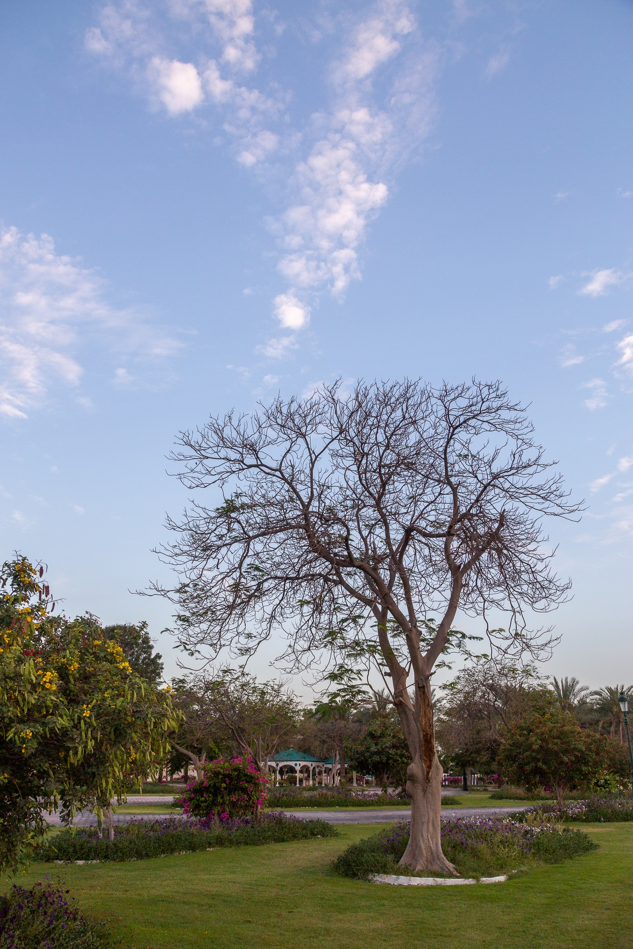 Leafless tree in late afternoon sun
