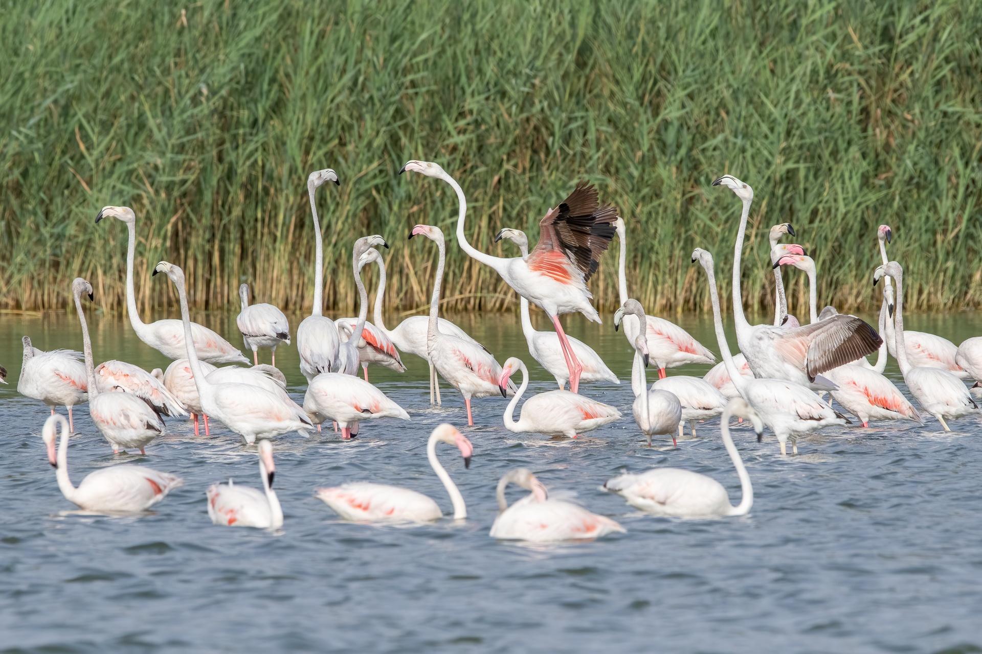 Flamingo morning activities