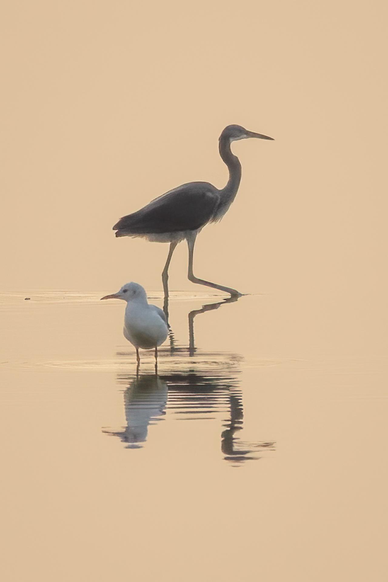 Bird reflections at sunset
