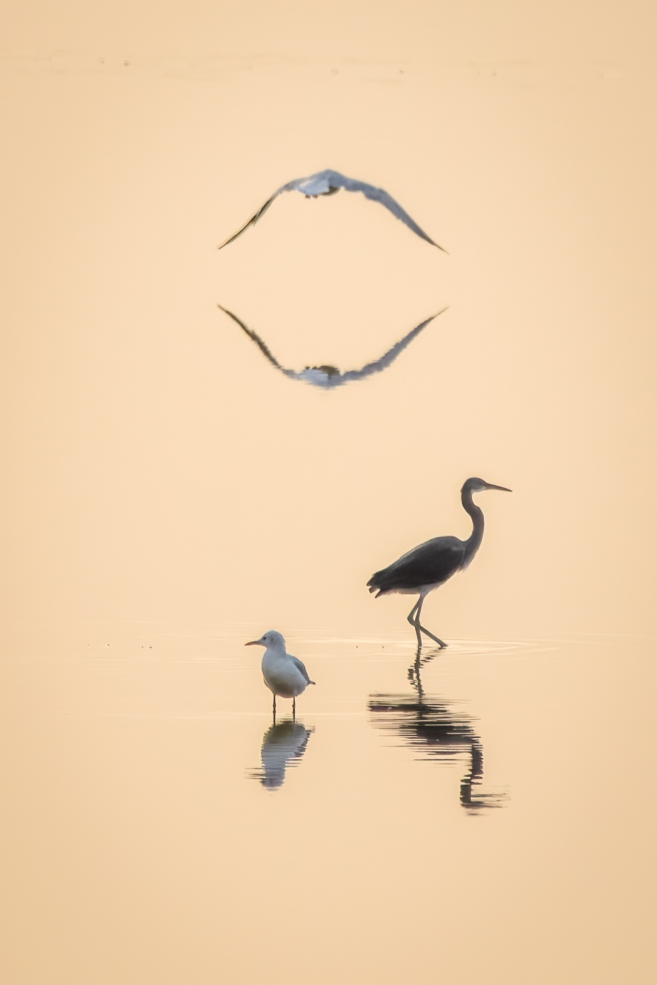 Bird reflections in calm water at sunset