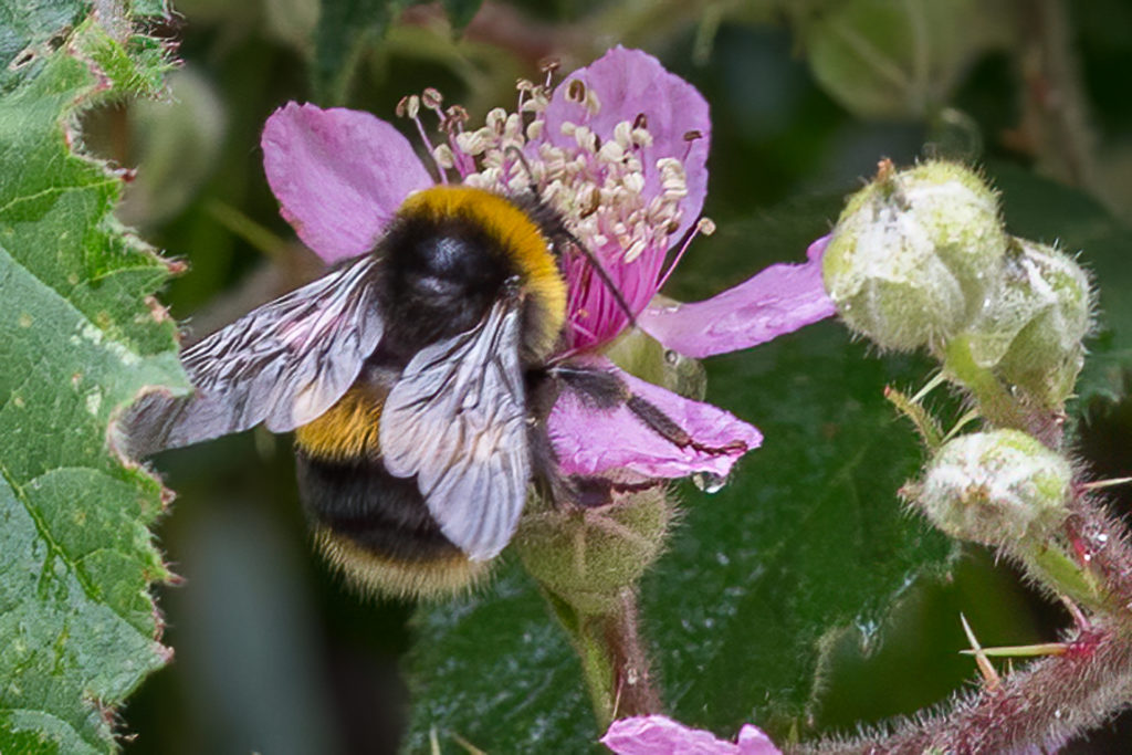 Bee enjoying nectar