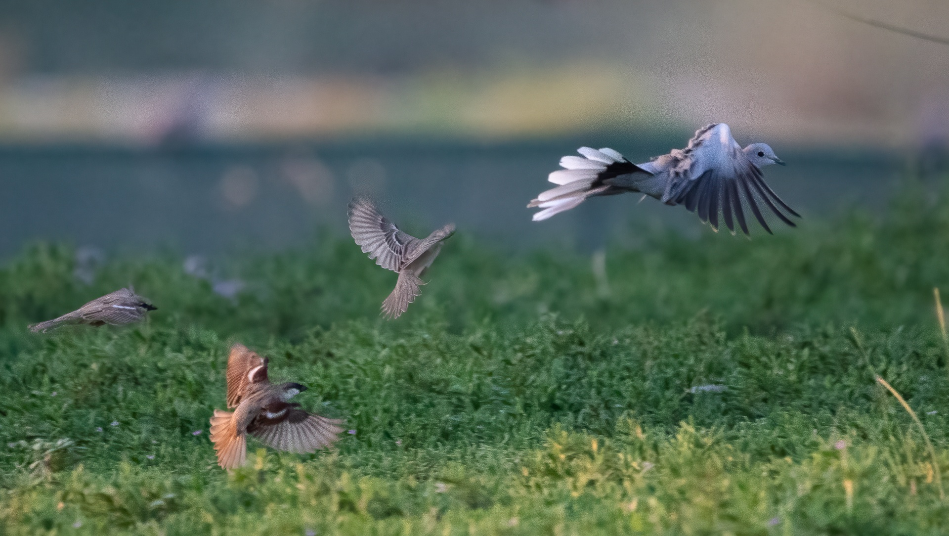 Birds playing chase