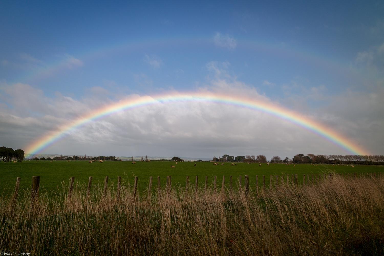 Rainbow over New Zealand paddock