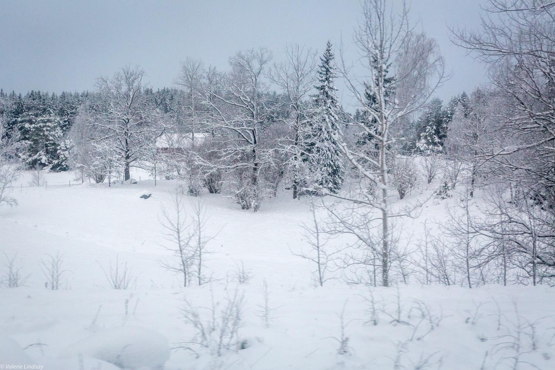 Snow scene in Sweden